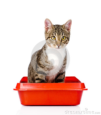 Free Kitten In Red Plastic Litter Cat. Isolated On White Background Stock Images - 52661064