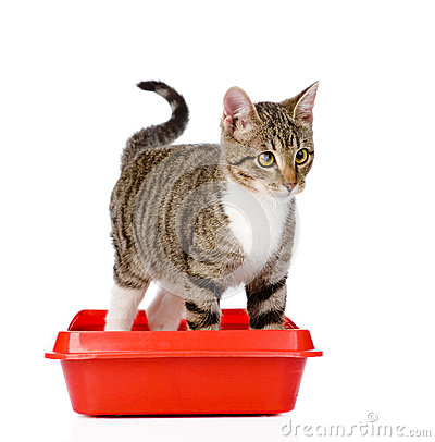 Free Kitten In Red Plastic Litter Cat.  On White Background Stock Images - 53997944