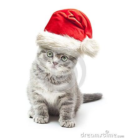 Free Kitten In Santa Claus Xmas Red Hat Stock Images - 35220924