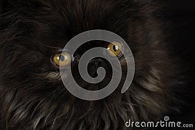 Kitten with intense eyes