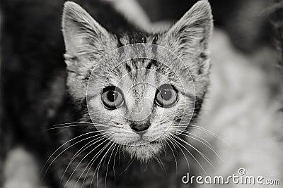 Kitten with an intense stare
