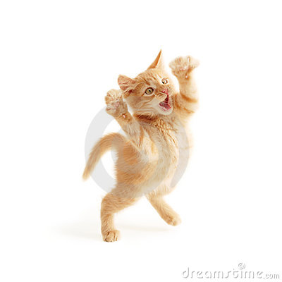Free Kitten Jumping Stock Photo - 15350730