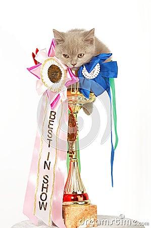Kitten in a large golden trophy