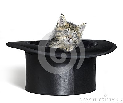 Kitten looking out of a black top hat