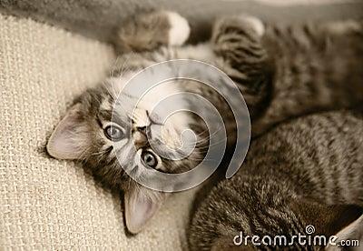 Kitten looking up