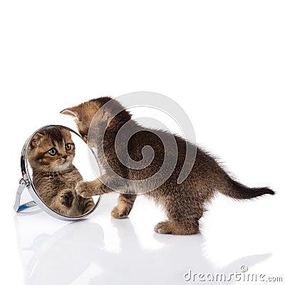 Kitten looks in a mirror
