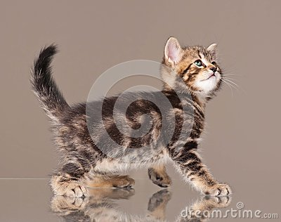 Kitten in movement
