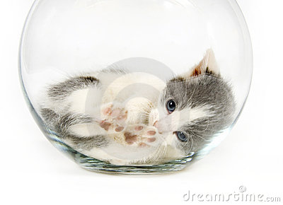 Kitten napping in a fishbowl