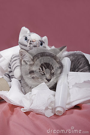 Kitten nestled in toilet paper.