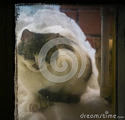 Free Kitten On Snow Pile At The Window Stock Image - 133032851