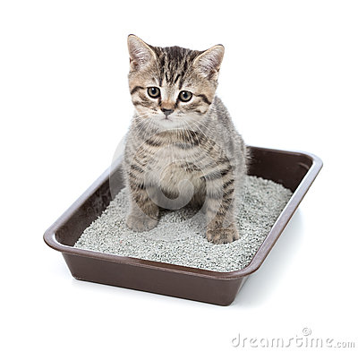 Free Kitten Or Little Cat In Toilet Tray Box With Litter Royalty Free Stock Images - 37018979