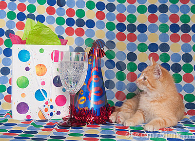 Kitten with party hat and champagne
