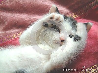 Kitten peek-a-boo