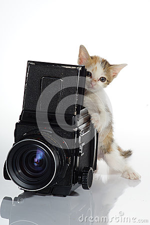 Kitten Photographer