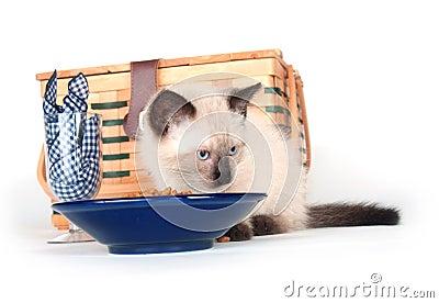 Kitten picnic