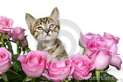 Kitten in Pink Roses