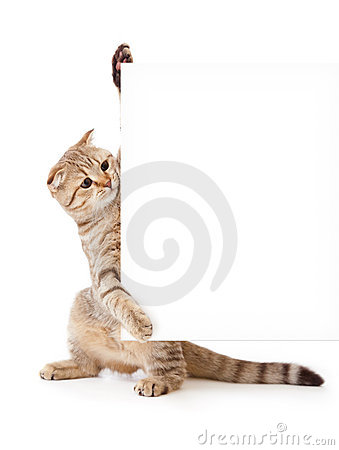 Kitten with placard or banner for your text