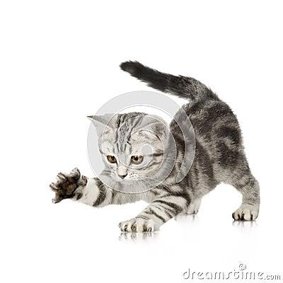 Free Kitten Playing Stock Photography - 2646842