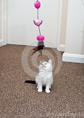 Kitten Playing Stock Photos - Image: 26620843