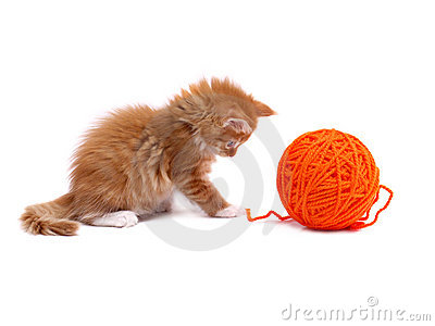 Kitten playing with ball of wool