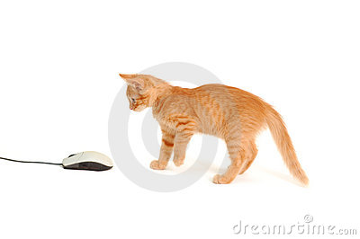 Kitten playing with computer mouse