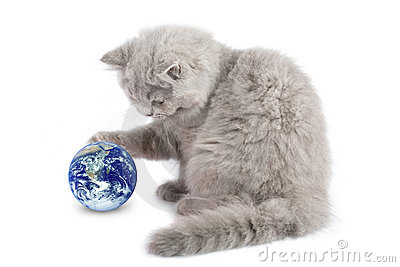 Kitten playing with earth planet isolated