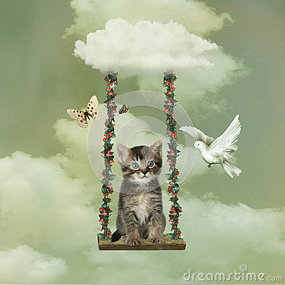 Kitten playing in the sky