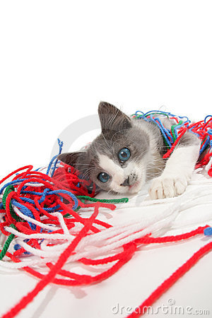 Free Kitten Playing With Yarn Stock Photography - 6470882