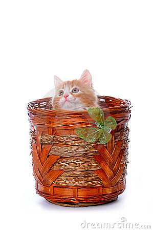 Kitten plays in a basket