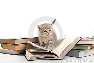 Kitten plays with the book
