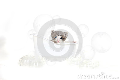 Kitten Portrait in Studio Taking a Bath