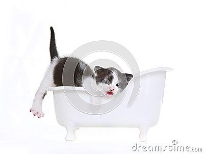 Kitten Portrait in Studio on White Background