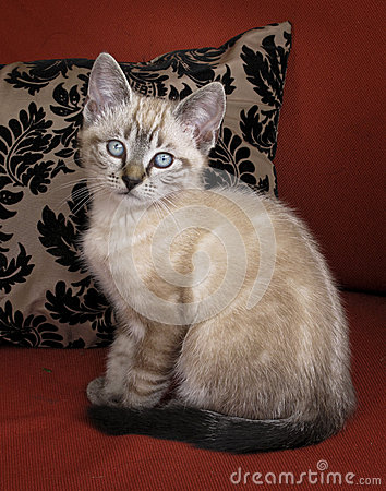 Kitten Posing
