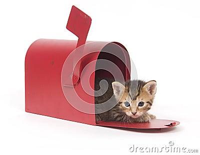 Kitten in a red mailbox