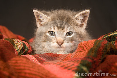 Kitten resting on a red blanket