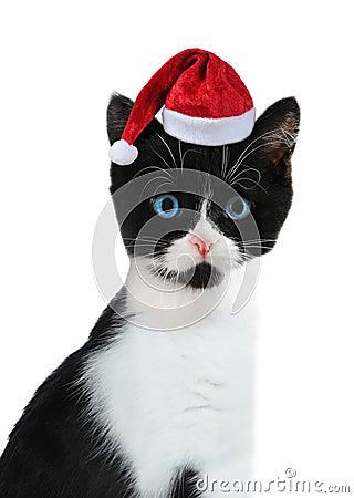 Kitten with Santa s cap