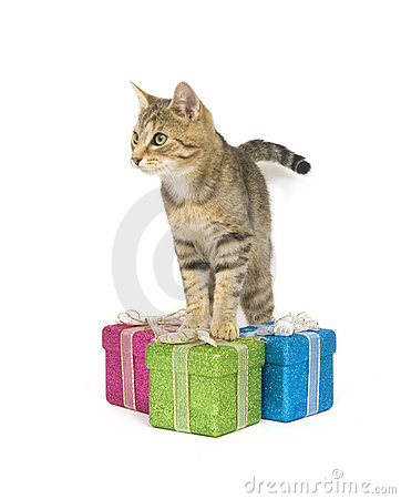 Kitten selecting a gift