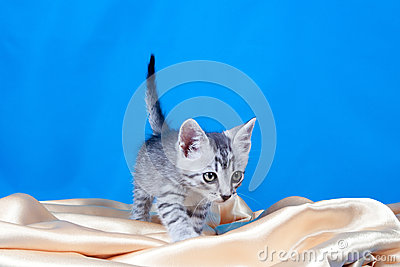 Kitten on a silk fabric