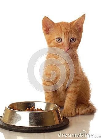Free Kitten Sitting Beside Food Bowl Royalty Free Stock Image - 5987346