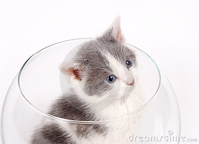 Kitten sitting in a fishbowl