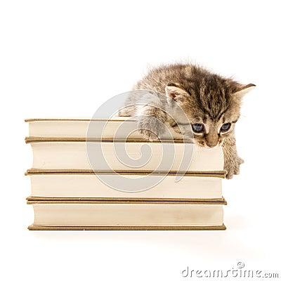 Kitten sitting on a pile of books