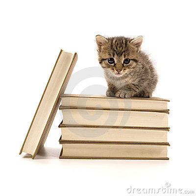 Kitten sitting on a pile of books
