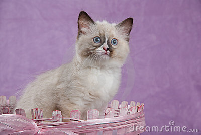 Kitten sitting in pink basket