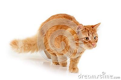 Kitten slink