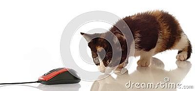 Kitten stalking computer mouse