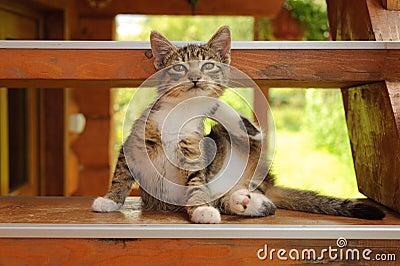 Kitten on the steps