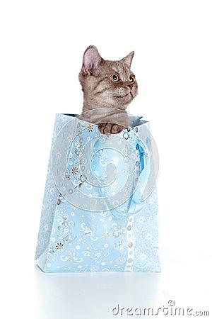 Kitten striped british in shopping bag