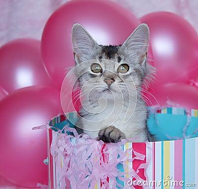 Kitten Surprise!