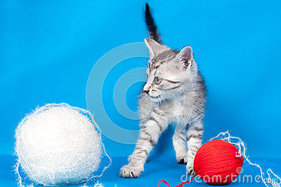 Kitten and threads for knitting