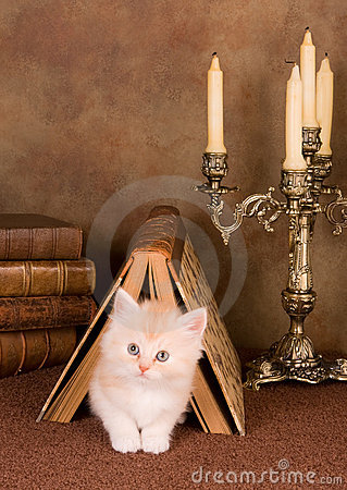 Free Kitten Under A Book Stock Photos - 11175213